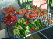 A day's harvest from the farm last summer