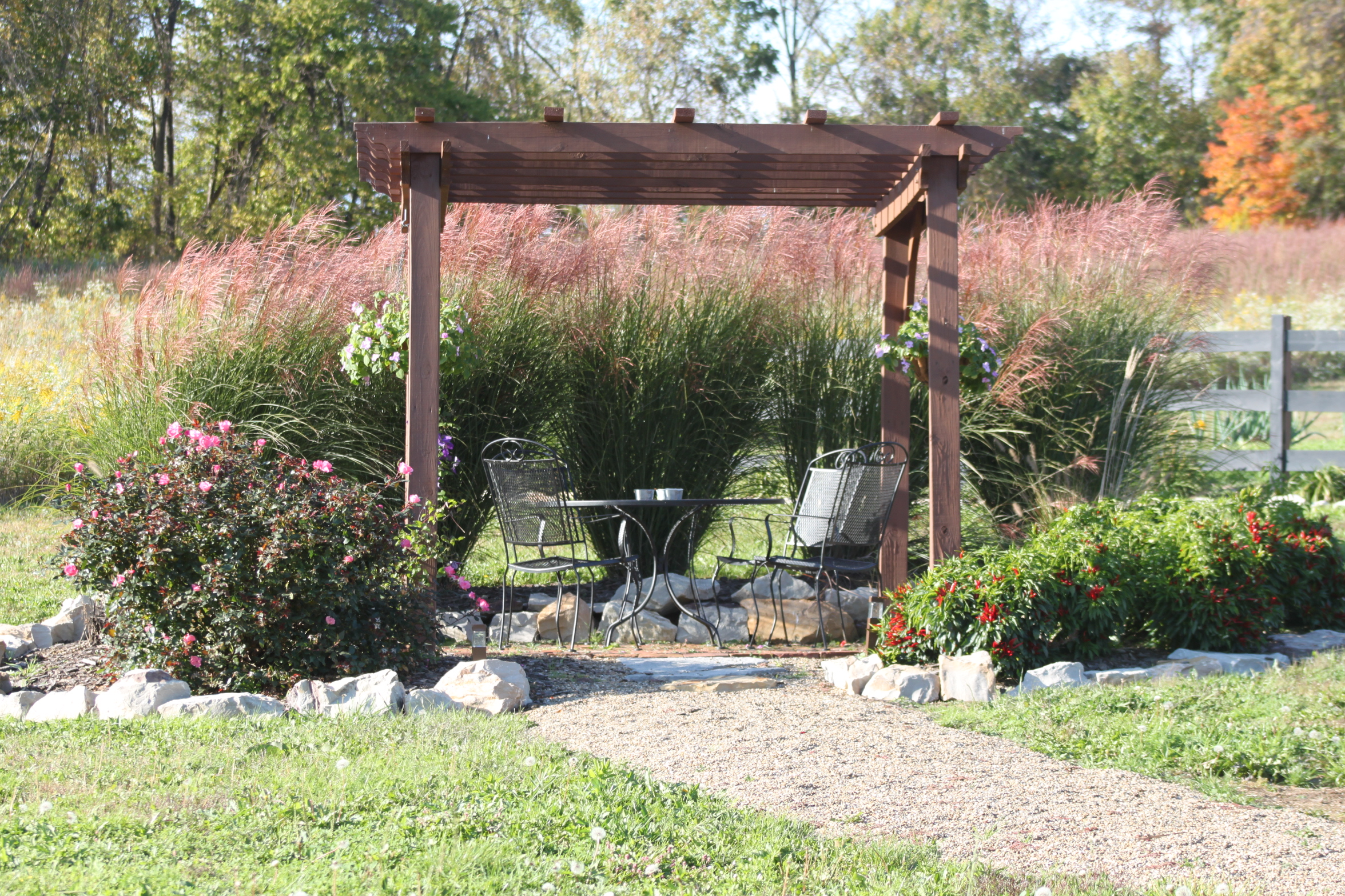 Planting and dividing ornamental grasses on the cheap for Ornamental grasses that grow in shade