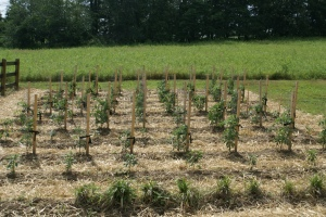 Cover crops help to eliminate weed problem in your garden - not create them
