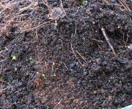 Add a few inches of compost to your beds  as a mulch each fall to keep them growing strong.