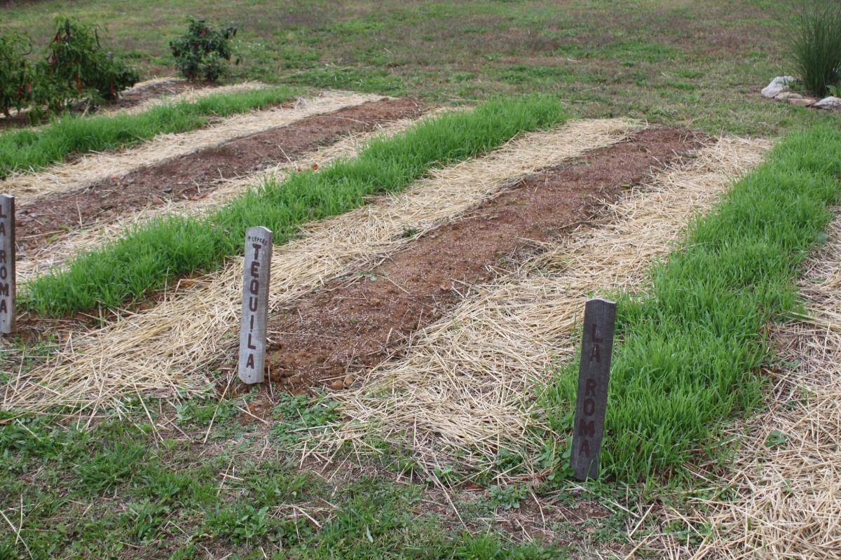 How to plant a green manure crop this spring to recharge for Garden soil
