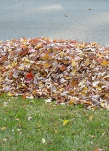 You can stock up and store leaves each fall for a free garden mul=
