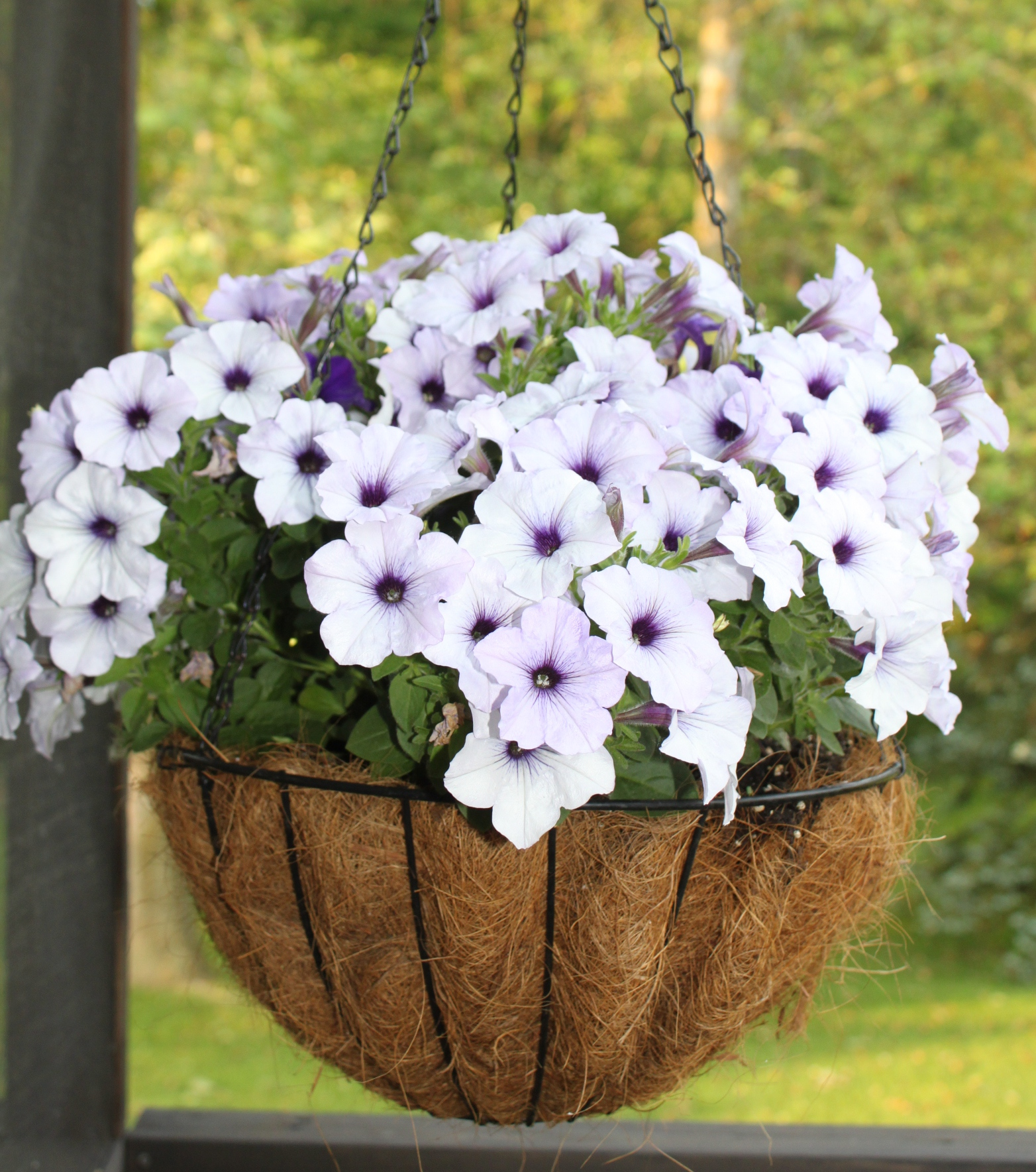 How to make hanging baskets - How To Make Hanging Baskets 43