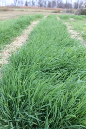 Cover crops keep te soil from being bare