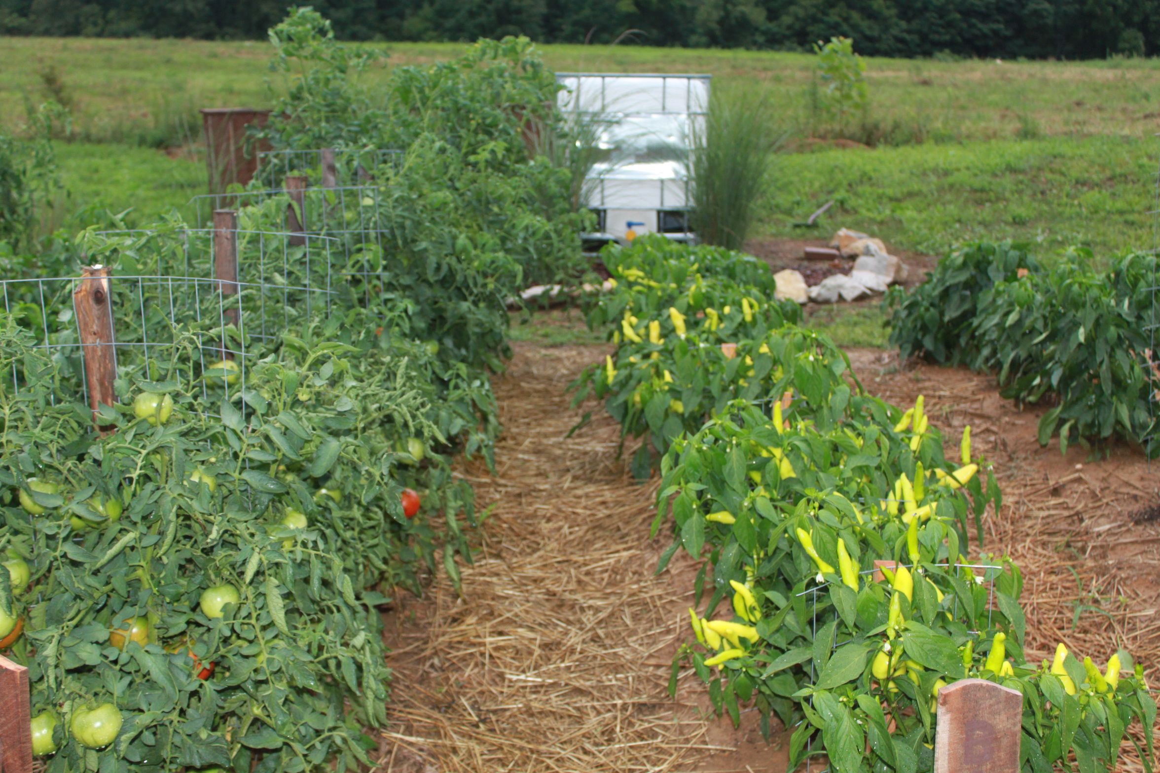 Vegetable Garden Rows