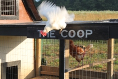 """Flying The Coop""  2013 will bring a new and bigger coop to the girls and the farm."