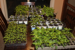 Growing plants from seed is a great way to cut down on the cost of a garden