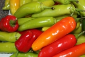 All about growing peppers in the garden