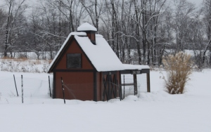 The coop in year 2 with a heavy winter blanket of snow - and a new paint job