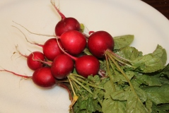 The color and vibrance of fresh radishes pulled from the soil