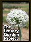 sensory garden project1