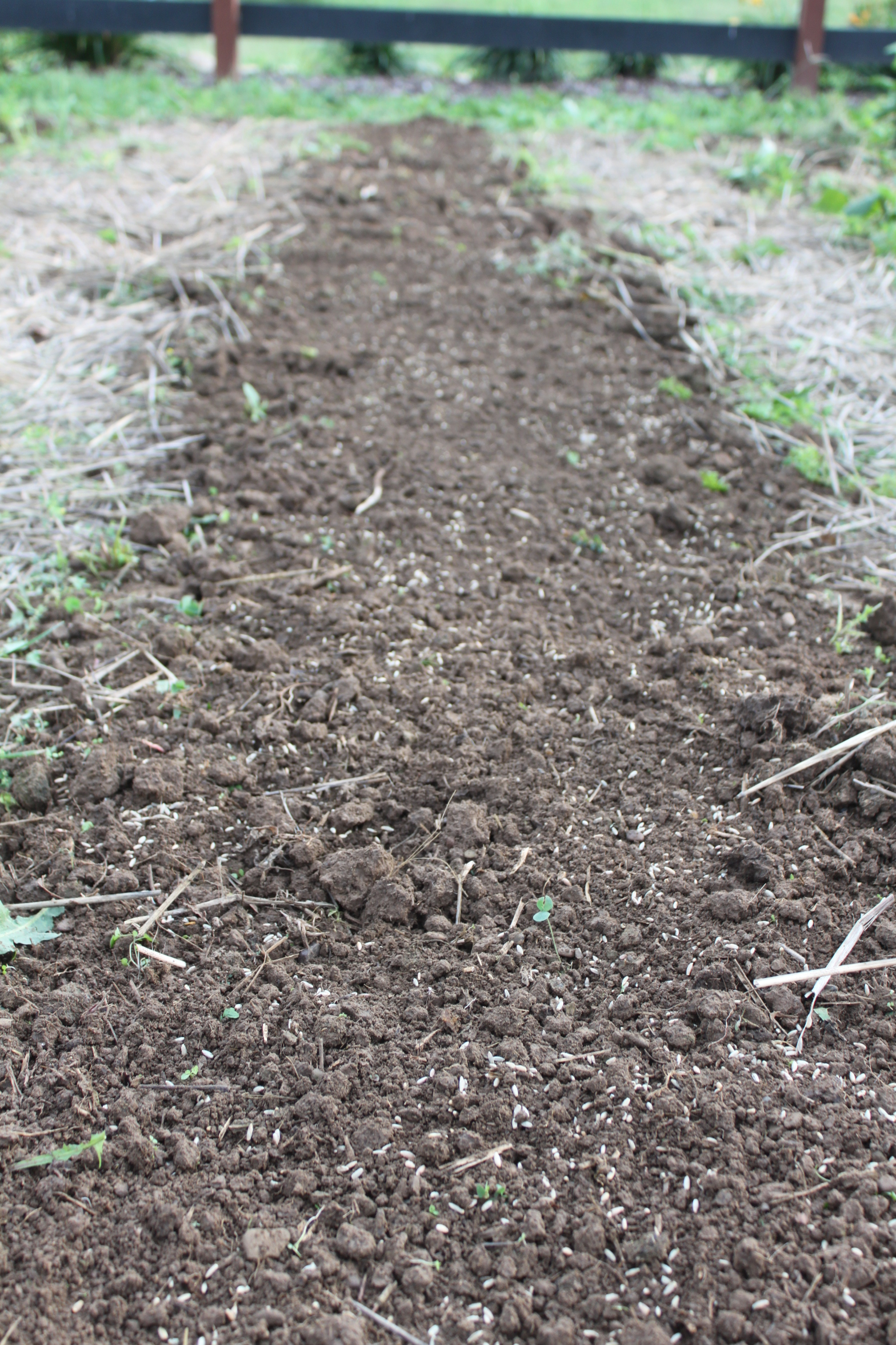 how to breathe live into your tired garden soil