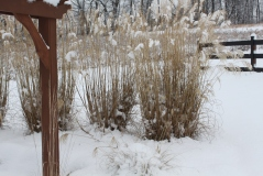 Those same grasses can catch the beauty of a winter snow