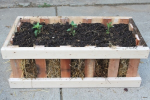 A simple straw bale crate planter made from pallets