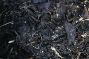 We use our compost as a main ingredient in our soil starting mix.