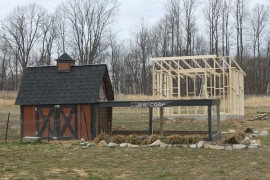 The new Chicken Coop emerges behind the old one.  The original coop will have new life with my sister and brother in law once our is complete - as they raise a few chicks of their own.