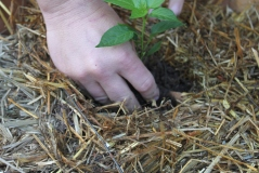 Simply place your plant in the hole and cover with more soil.