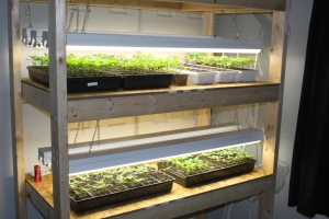 We start almost all of our seeds on our home built seed starting rack