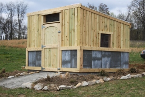 The new coop wa completed early in the year - a spacious and secure home for our girls.