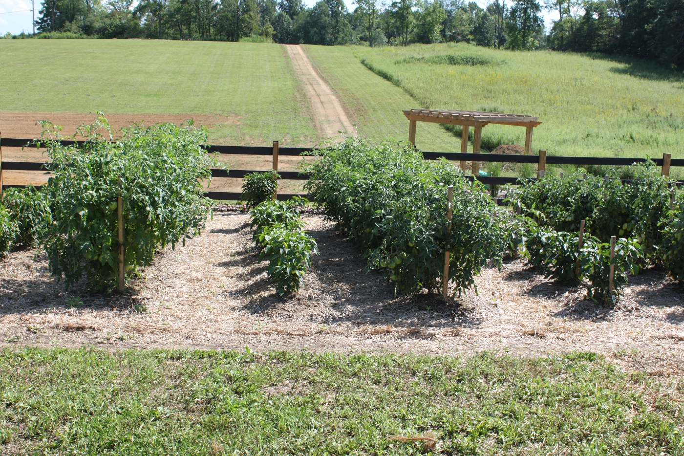 How To Build The Ultimate Tomato Cage For Under 2 The