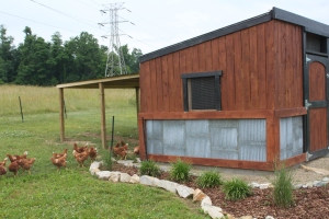 We will use the old fencing to build permanent outside areas for the chickens