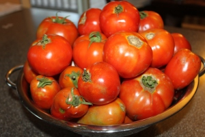Fresh tomatoes from the garden!
