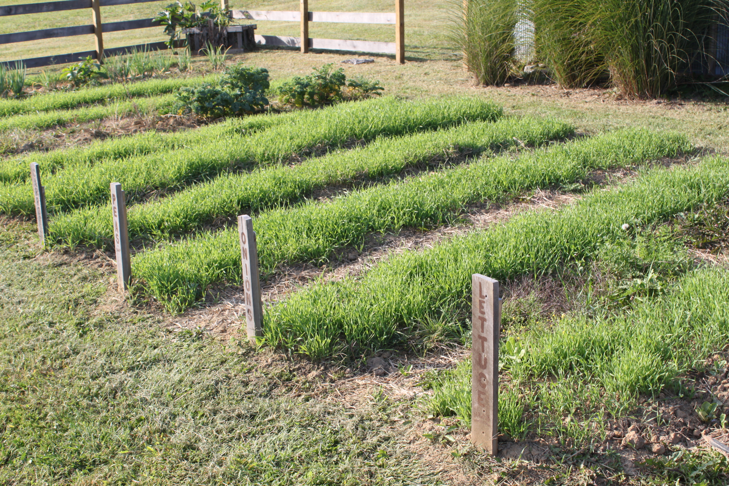 Simple tips to building great garden soil naturally - Cover crops for vegetable gardens ...