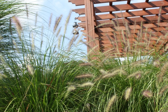 The ornamental grasses have started to plume - another sign that fall is on the way!