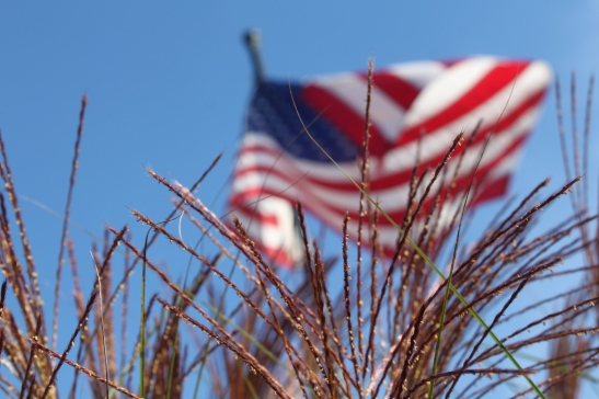 The plumes from the ornamental grasses reach up in the air to frame the flag that flies at the farm.