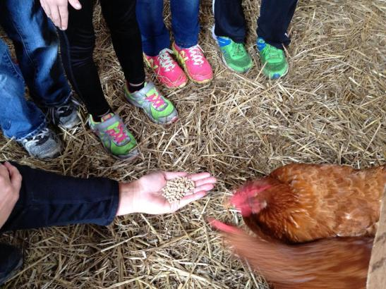 The Chickens gobble up some food - you have to love the bright footwear of the kids!