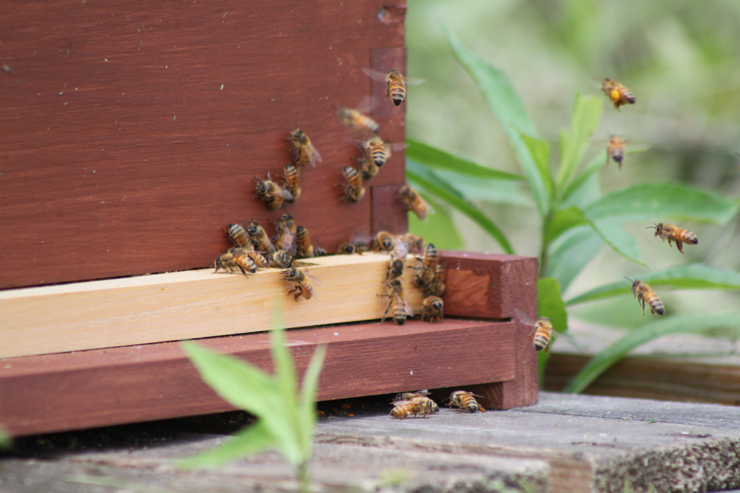 taking care of our honeybees in the winter old world garden farms