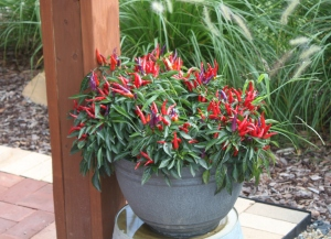 Potted plants on a patio or deck can add a big splash of color