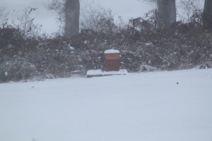 Our bee hive last year was simply unable to survive through the bitter cold winter
