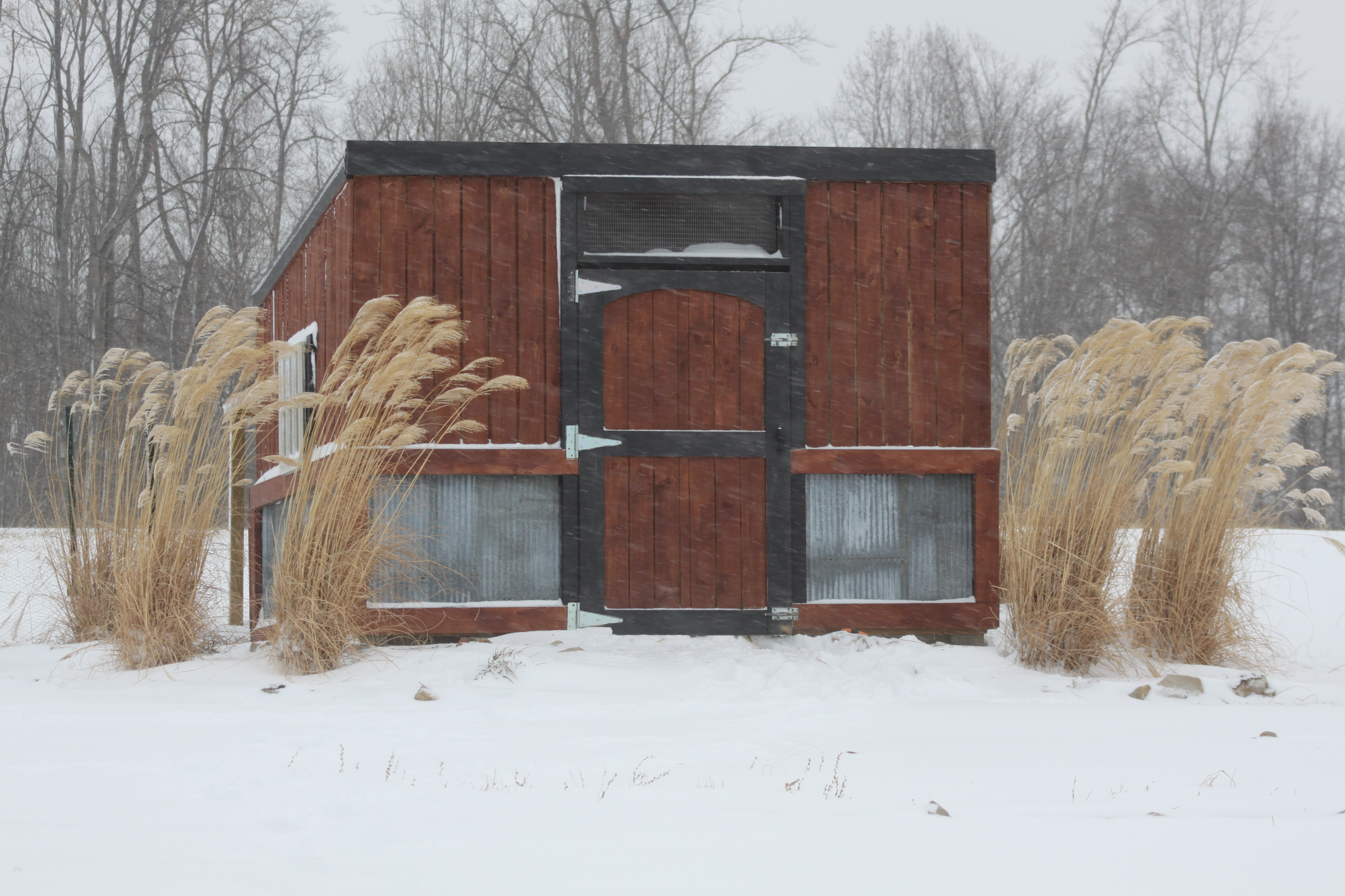 Preparing the chicken coop and garden for winter old for Old farm chicken coops
