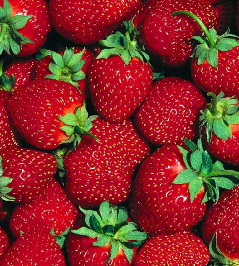 Growing strawberries how to plant and grow your own this year old world garden farms - Plant strawberries spring ...