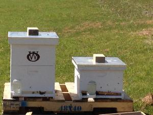 The bee hives are installed!