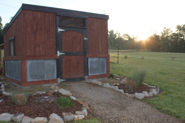 The early morning sun begins to appear over the chicken coop