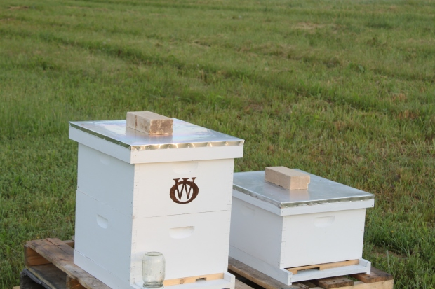 Its a bit early for the bees to be out at 6 am - but the hive will be buzzing in an hour or two with activity