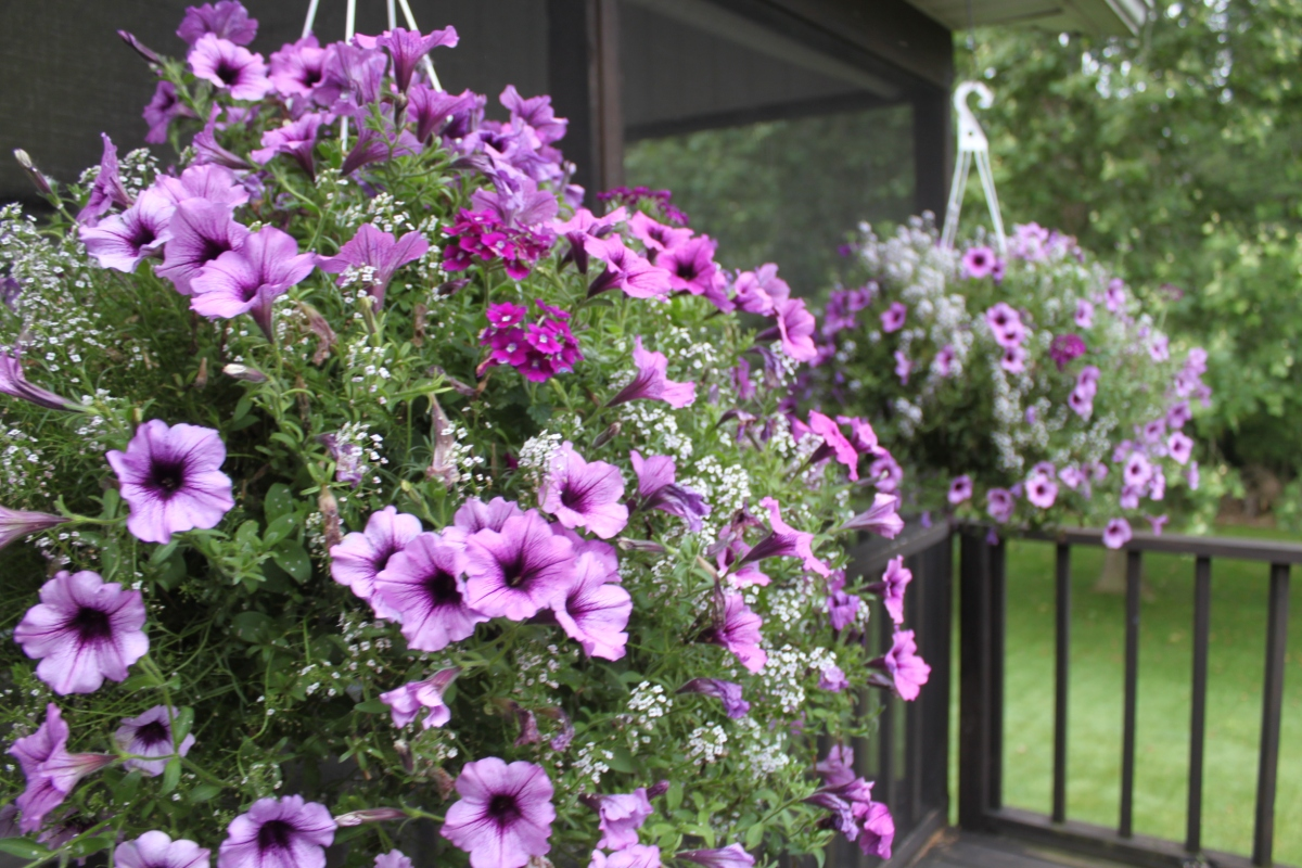 Keeping Potted Plants and Hanging Baskets Beautiful