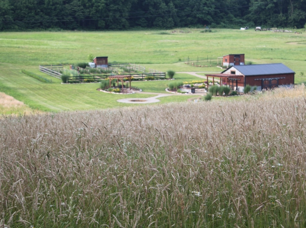 A view of the farm from above, taken from a fallow field with tall grass just in bloom