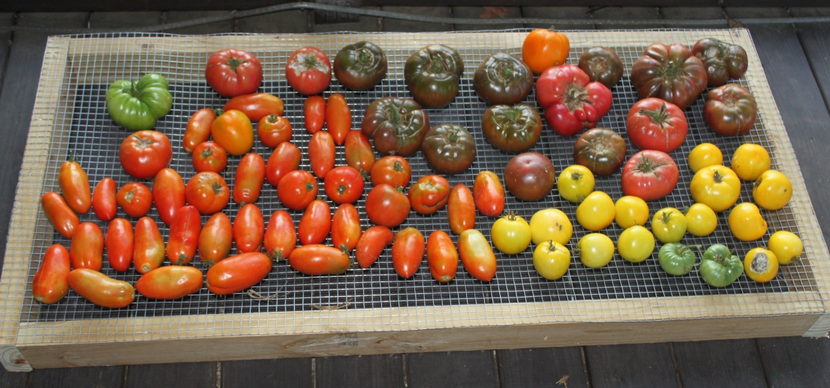The Best Tomatoes To Grow For Eating, Cooking and Canning ...