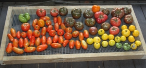Nothing can beat the flavor of heirloom tomatoes!