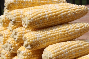 Sweet corn is easy to freeze!