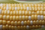 How To Preserve Sweet Corn