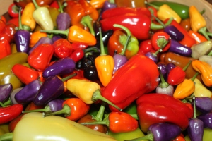Crops like these peppers take valuable nutrients from the soil - and cover crops can put them back