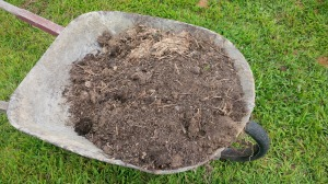 An equal mix of compost and soil from the freshly dug hole is perfect for filling in around the tree