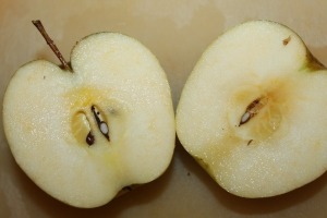 They may not be the prettiest of apples from the outside but the insides are picture perfect!