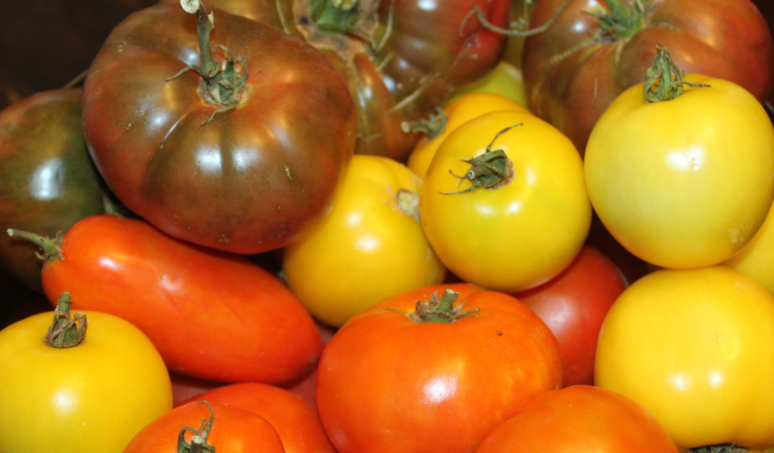 The Best Tomatoes To Grow For Eating, Cooking and Canning | Old World ...