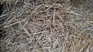 Straw is an excellent choice for placing in the walking rows and in building your planting rows