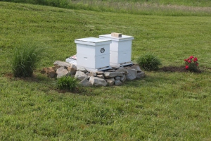 Our new home for the bees on a protected hillside.